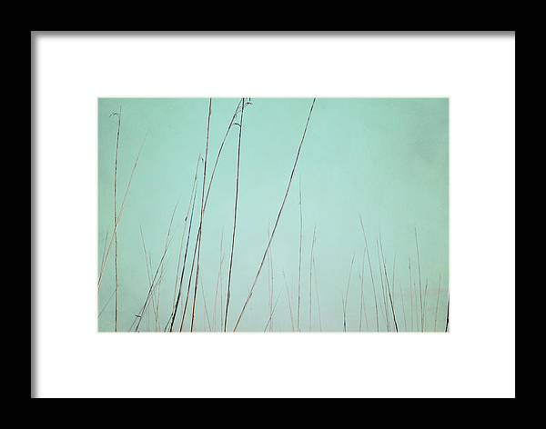 Swamp Reeds Framed Print featuring the photograph A Quiet Breath by Sharon Kalstek-Coty