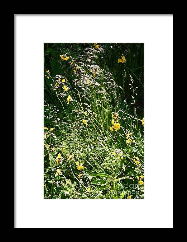 Daisies Framed Print featuring the photograph A Riot of Wildflowers by Beebe Barksdale-Bruner
