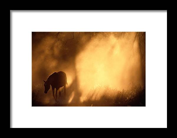 North America Framed Print featuring the photograph A Roaming Horse In Montana by Raymond Gehman