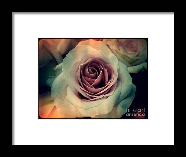 Angela Wright Framed Print featuring the photograph A Rose by Angela Wright