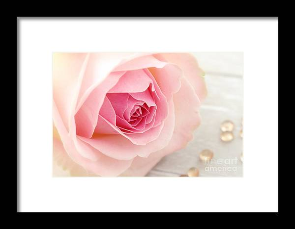 Rose Framed Print featuring the photograph A Rose by LHJB Photography