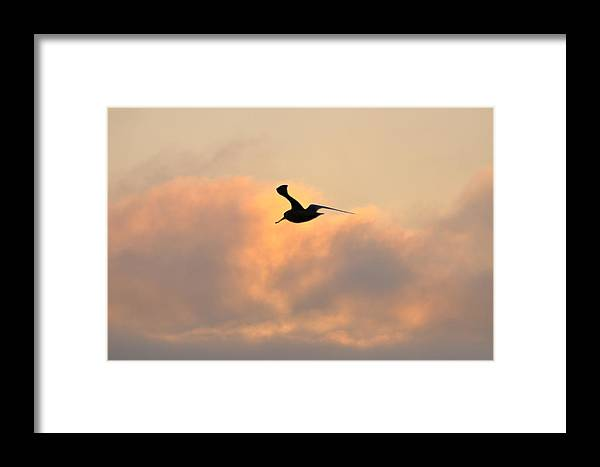 Seagull Framed Print featuring the photograph A Seagull Takes Flight by Bill Cannon