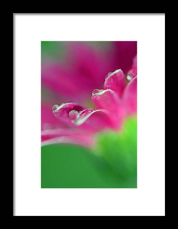 Flower Framed Print featuring the photograph A Simple Thought by Melanie Moraga