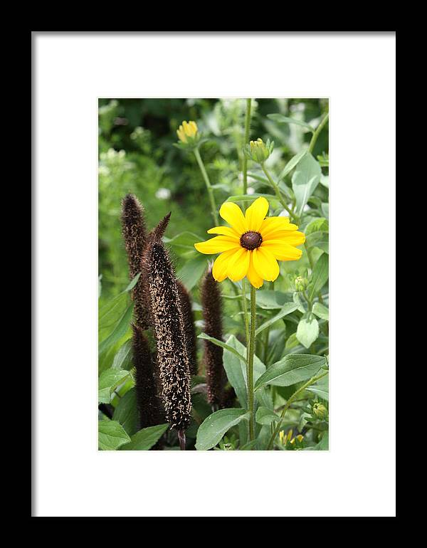 Flower Framed Print featuring the photograph A Single Susan by Mike Lytle