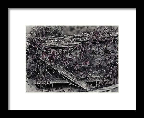 Cat Framed Print featuring the photograph A Soft Entanglement by Susan Capuano