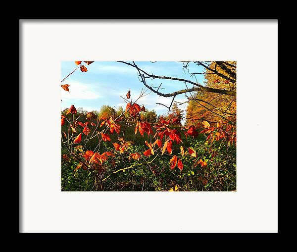 Autumn Framed Print featuring the photograph A Splash Of Red II by Julie Dant