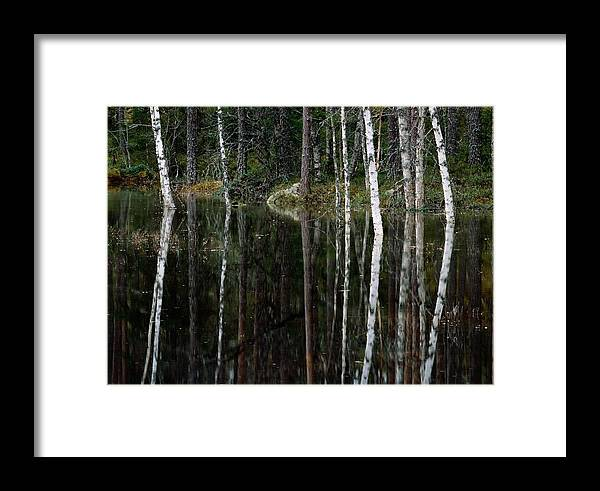 Scenic Views Framed Print featuring the photograph A Stream At High Water In A Woodland by Mattias Klum