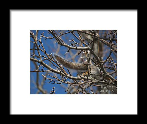 Squirrel Framed Print featuring the photograph A Tale for Another Time by Rrrose Pix