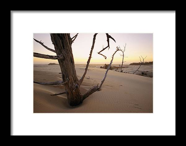 Oregon Dunes National Recreation Area Framed Print featuring the photograph A Twilight View Of Drift Wood by Phil Schermeister