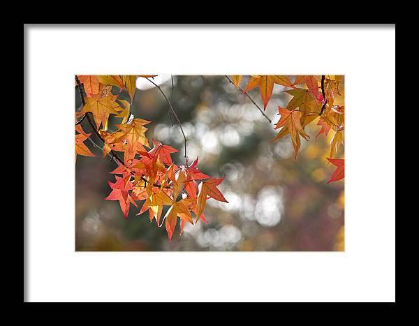 Autumn Framed Print featuring the photograph A U T U M N . C O L O R S by Thomas Herzog