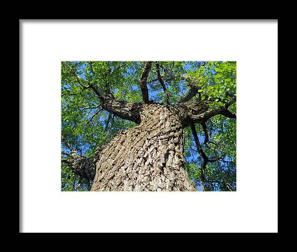 Tree Framed Print featuring the photograph A View From Below by Lynnette Johns