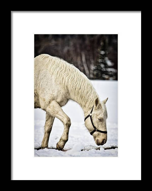 Horse Framed Print featuring the photograph A Walk In The Snow by Gary Smith