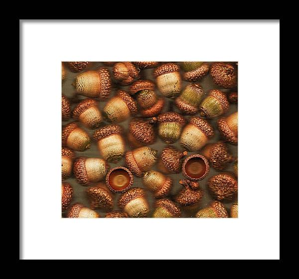 Acorns Framed Print featuring the photograph Achromatic Acorns by Mary Ann Southern