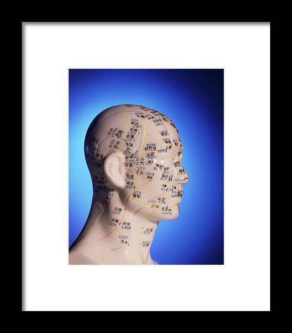 Acupuncture Chart Framed Print featuring the photograph Acupuncture Chart On A Cast Of A Head And Neck by Pasieka