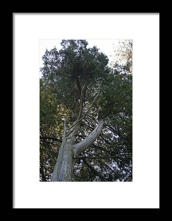 Cedar Photographs Framed Print featuring the photograph Admiration Two by Alan Rutherford
