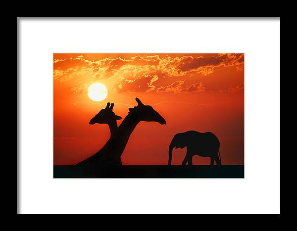 african animals framed print by don hammond