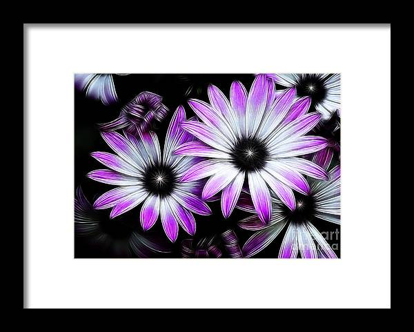 Flowers Framed Print featuring the photograph Africian Daisy by Carol A Commins