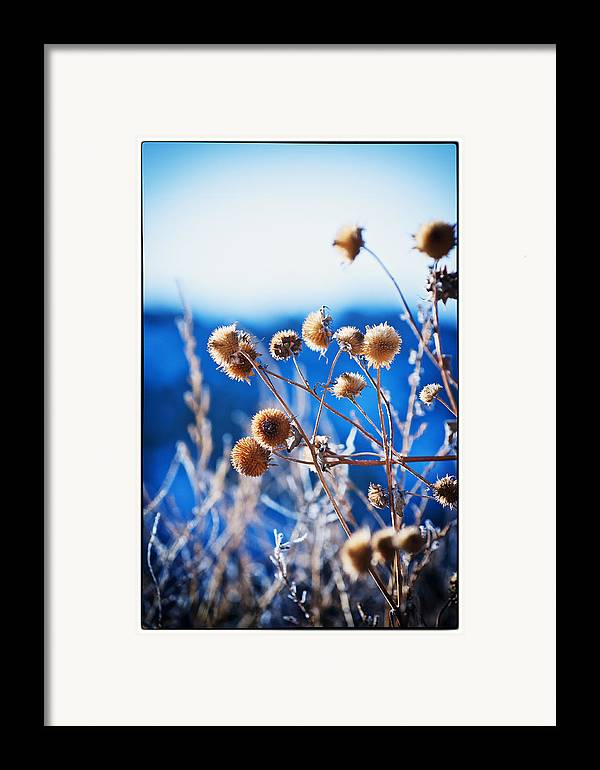 Nature Framed Print featuring the photograph Against The Blue Sky by Lisa Spencer