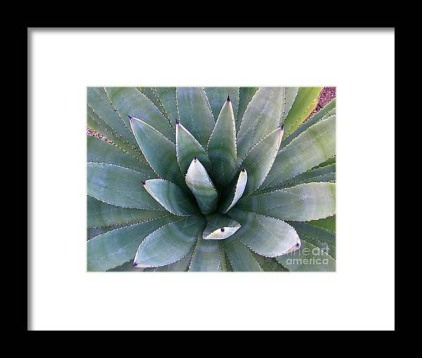 Agave Framed Print featuring the photograph Agave by Nicole Fleckenstein