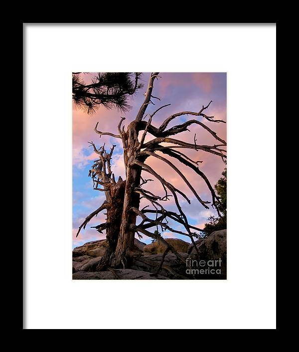 Tahquitz Peak Framed Print featuring the photograph Aged Beauty -2 by Baywest Imaging