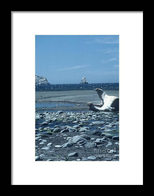 Photo Framed Print featuring the photograph Ahoy by Alcina Morello