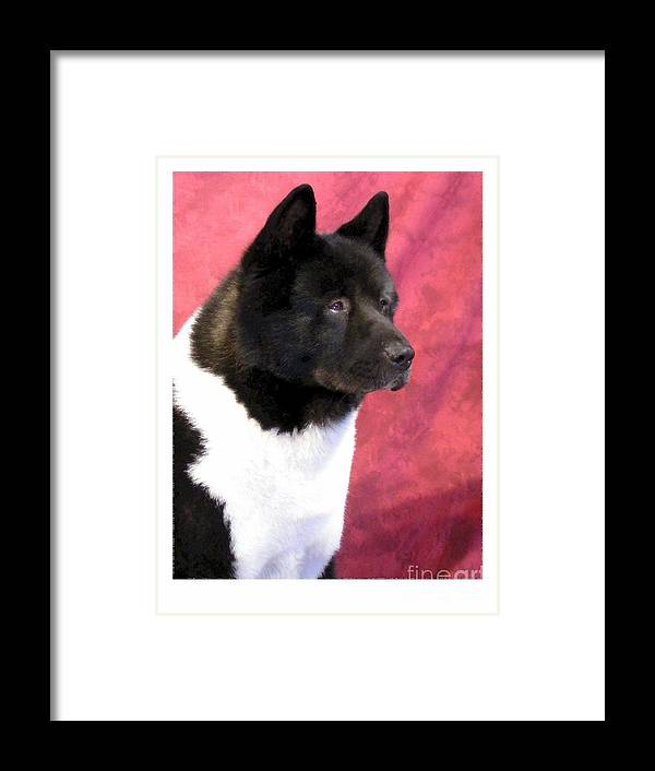 Akita Digital Art Framed Print featuring the digital art Akita 458 by Larry Matthews