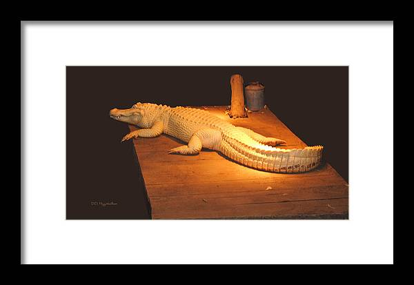 Alligator Framed Print featuring the photograph Albino Alligator by DiDi Higginbotham