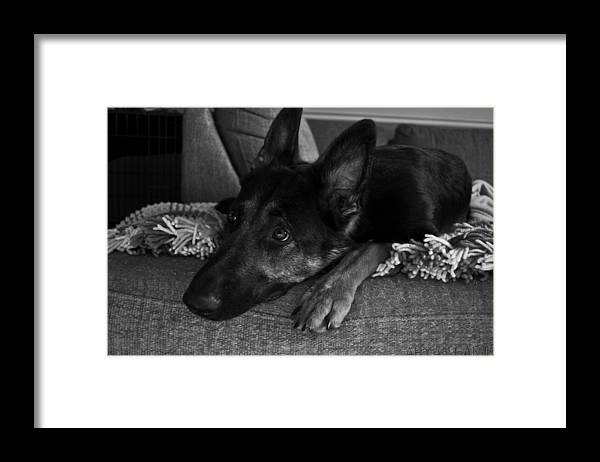 Framed Print featuring the photograph Alert by Aryan Ganji
