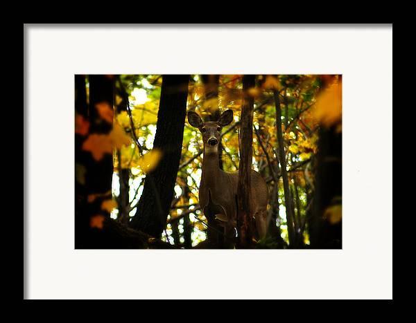 Hovind Framed Print featuring the photograph Alert Doe by Scott Hovind
