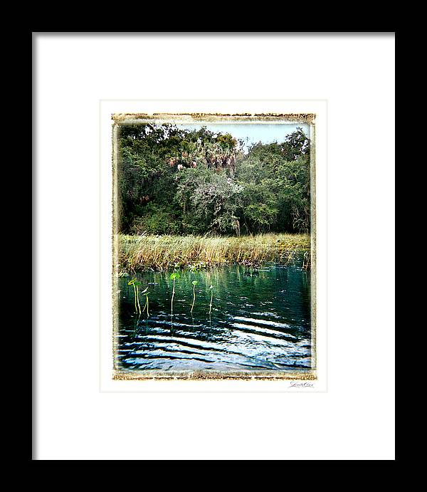 Waterway Framed Print featuring the photograph Alexander Springs by Linda Olsen