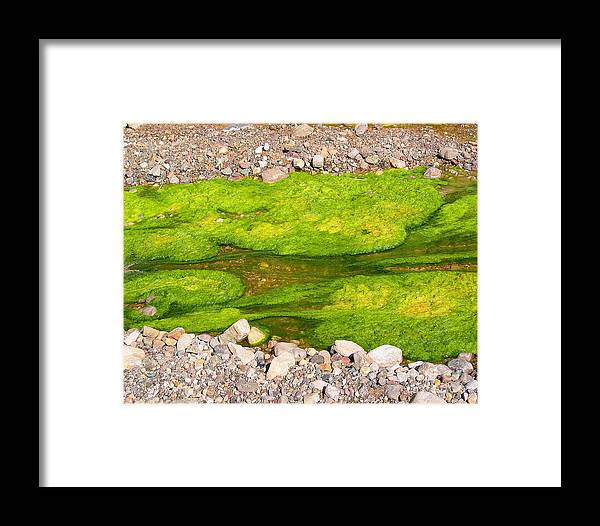 Algae Bloom Framed Print featuring the photograph Algae Bloom Natural Abstract Art Of Nature by Merton Allen