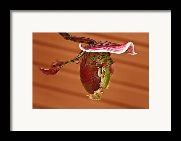 Amphibians Framed Print featuring the photograph All Aboard by Jean Noren