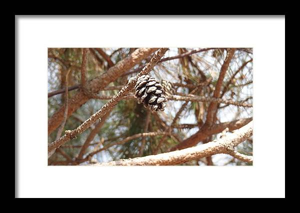 Pine Cone Framed Print featuring the photograph All Alone by Jessica Cruz