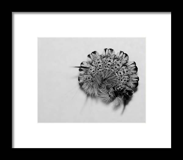 Nature Framed Print featuring the photograph All Coiled Up by Susan Capuano