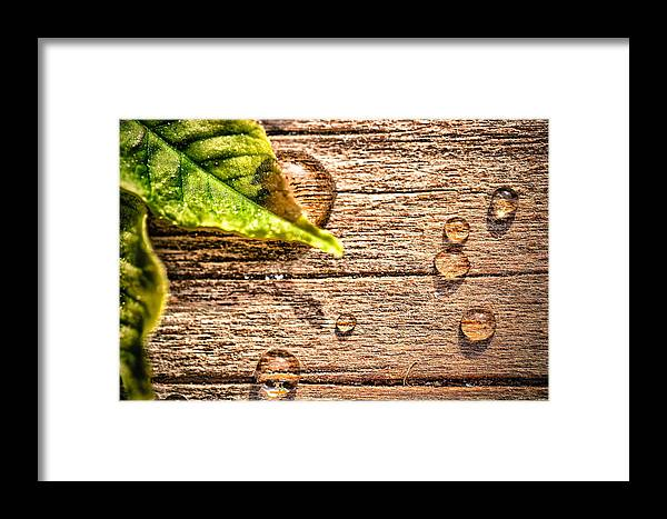 Leaf Framed Print featuring the photograph All That Drops On The Deck by Christy Patino