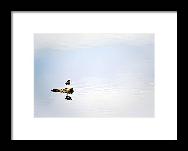 Bird; Blue; Clouds; Country; Digital Art; Mel; Muleshoe; Muleshoe Nwf; National Wildlife Reserve; Nature; Photographs; Photography; Photos; Playa; Prints; Sandpiper; Scenes; Scenic; Sky; Texas; Weather Framed Print featuring the photograph Alone - Just The Two Of Us by Melany Sarafis