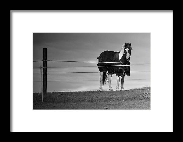 Horse Framed Print featuring the photograph Alone On The Hill by Kevin Askew