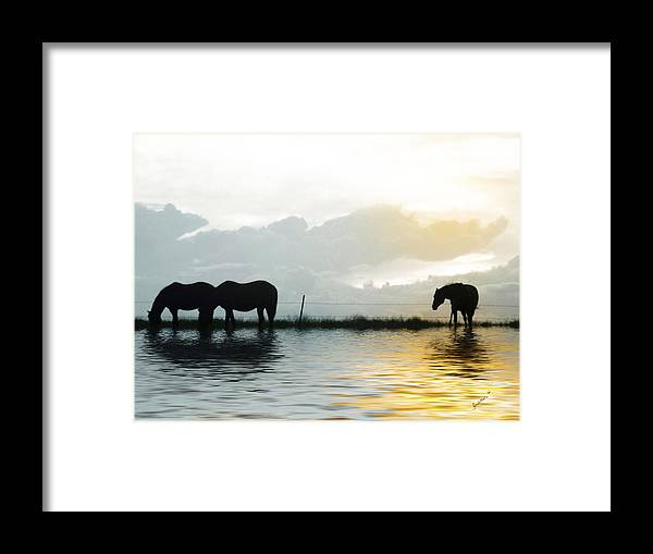 Horse Framed Print featuring the photograph Alone by Susan Kinney
