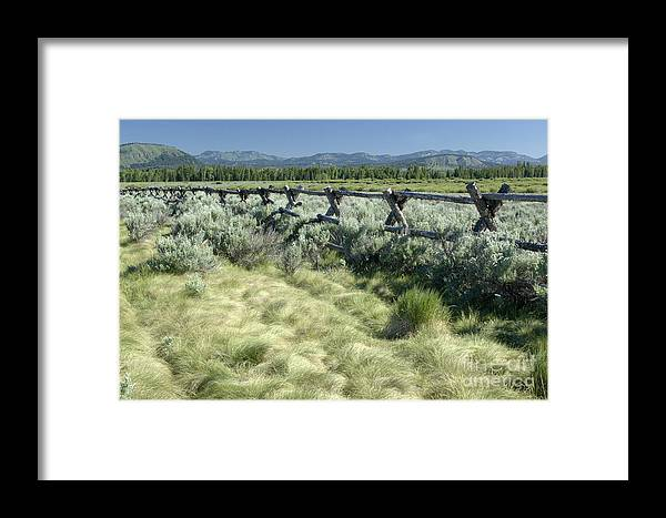 Grand Teton National Park Framed Print featuring the photograph Along The Fence by Sandra Bronstein