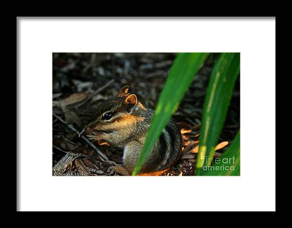 Outdoors Framed Print featuring the photograph Alvin by Susan Herber