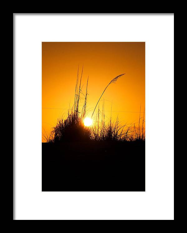 Sea Oats Framed Print featuring the photograph Amber Waves by Christine Stonebridge