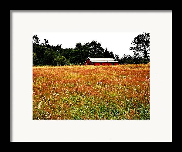 Barn Framed Print featuring the photograph Amber Waves by Kevin D Davis