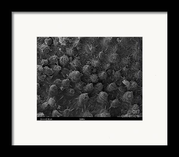 Sem Framed Print featuring the photograph American Toad Skin, Sem by Ted Kinsman