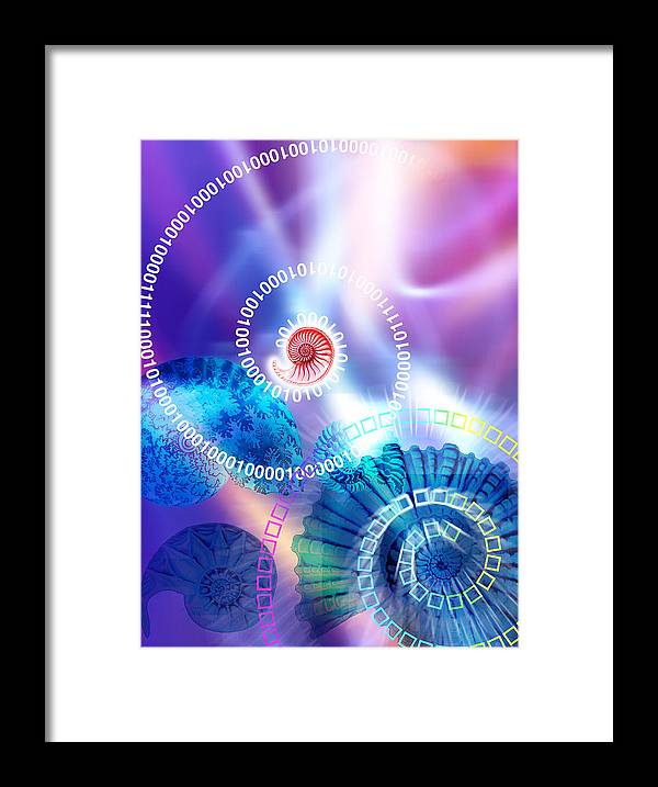 Ammonite Framed Print featuring the photograph Ammonite Fossils by Pasieka
