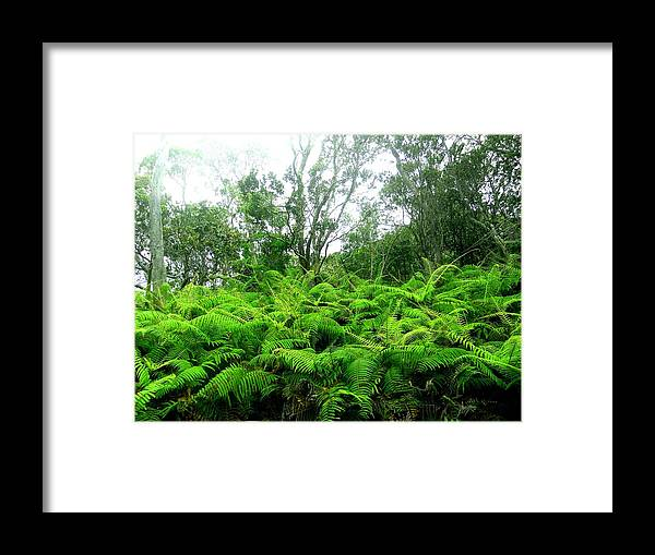 Green Framed Print featuring the photograph Among The Ferns by Kimberly Lenz