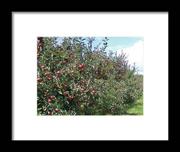 Apples Framed Print featuring the photograph An Apple A Day... by Hickory Tree Productions