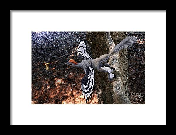 Paleoart Framed Print featuring the digital art Anchiornis huxleyi by Julius Csotonyi