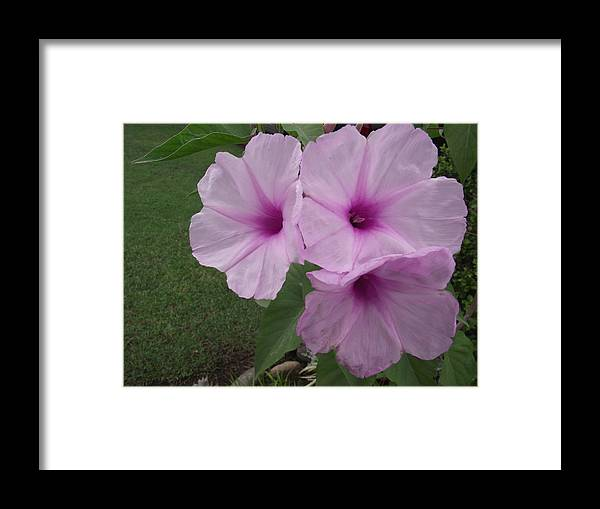 Pink Framed Print featuring the photograph And There Were Three by Rani De Leeuw