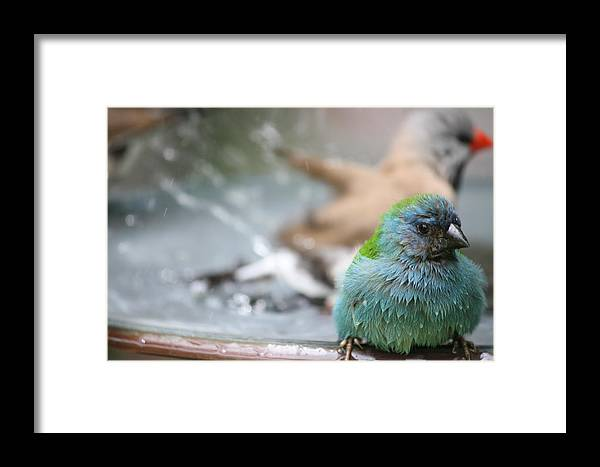 Nature Framed Print featuring the photograph Another After The Bath by Andrea OConnell