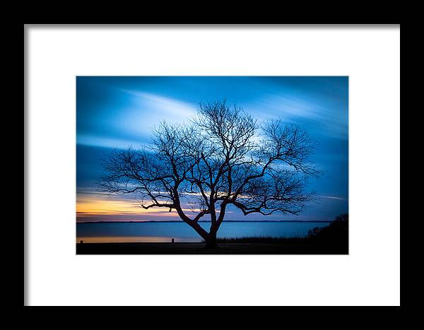 Currituck Framed Print featuring the photograph Another Favorite Tree by Joye Ardyn Durham